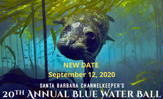 Flier with an invitation to the Blue Water ball, showing a happy seal swimming underwater with event details.